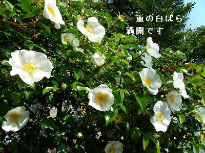 s-2009_04164pome0019.jpg