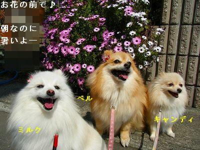 s-2009_04164pome0020.jpg
