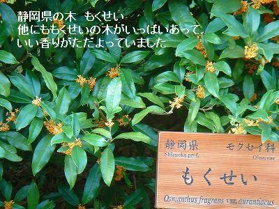 s-DSC03510.jpg