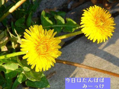 s-DSC03853.jpg