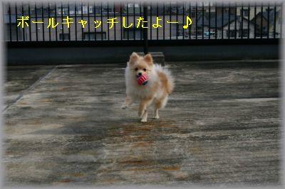 s-IMG_0468.jpg