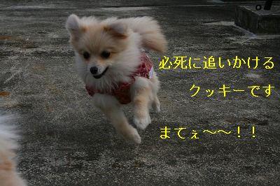 s-IMG_0529.jpg