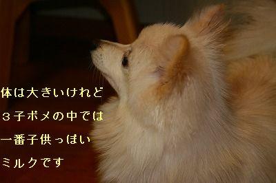 s-IMG_0892.jpg