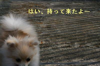 s-IMG_0912.jpg