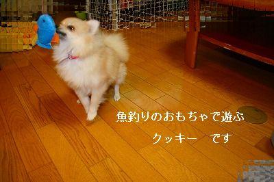 s-IMG_1001.jpg