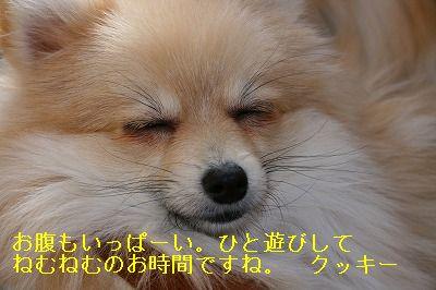 s-IMG_1598.jpg