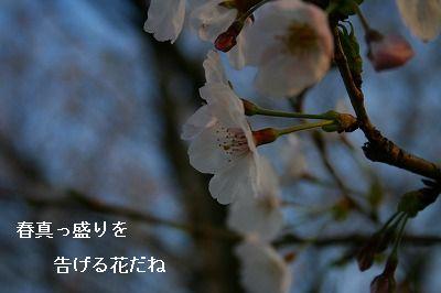 s-IMG_2104.jpg