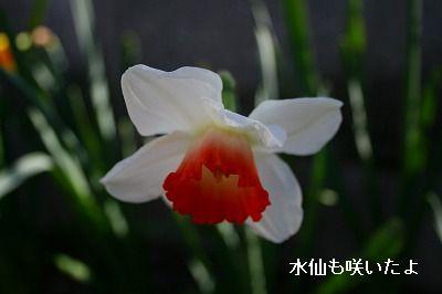 s-IMG_2134.jpg