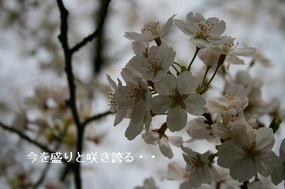 s-IMG_2170.jpg