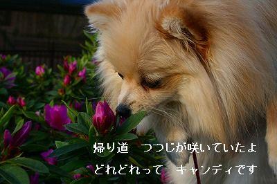 s-IMG_2343.jpg