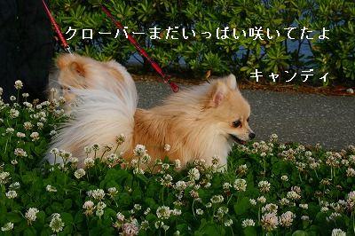 s-IMG_2709.jpg
