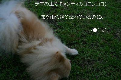 s-IMG_3100.jpg