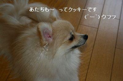 s-IMG_3211.jpg