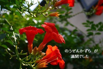 s-IMG_3517.jpg