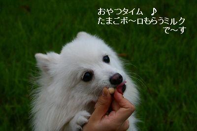 s-IMG_3588.jpg