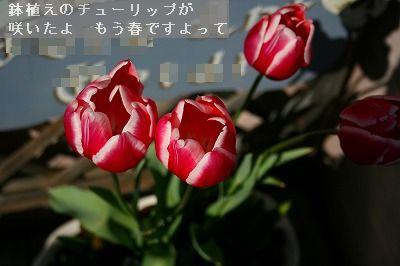 s-IMG_5052.jpg