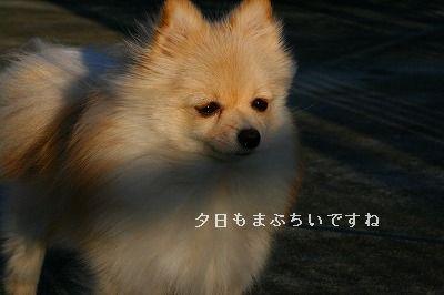 s-IMG_5074.jpg
