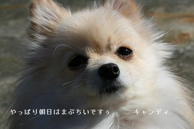 s-IMG_5175.jpg