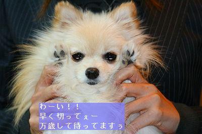 s-IMG_5202.jpg