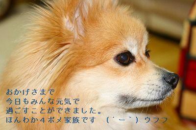 s-IMG_5254.jpg