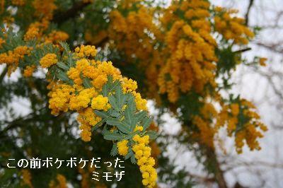 s-IMG_5491.jpg