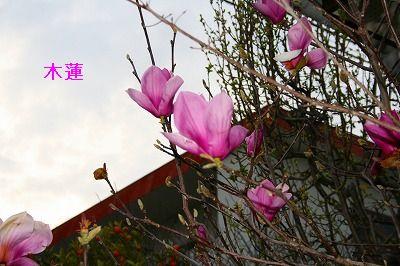 s-IMG_5495.jpg