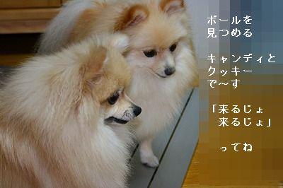 s-IMG_5992.jpg
