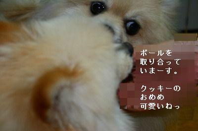 s-IMG_6000.jpg