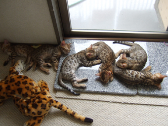 左から、六女・長男・三女・五女・四女・次女
