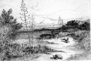 illustration de Foulquier (XIXegrave;me)
