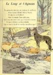 loup et agnau
