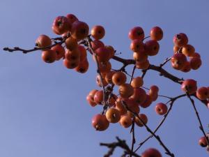 秋の色29
