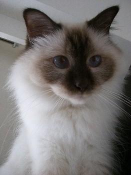 Cat090116.jpg