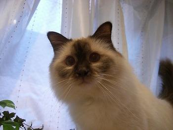 Cat090119.jpg