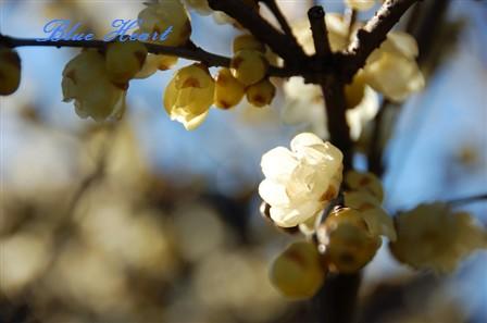 0103roubai5_20090303214106.jpg