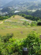 本山の棚田