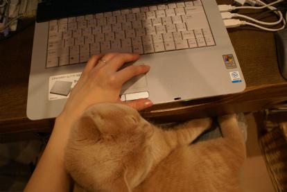 ネェネェの手、枕