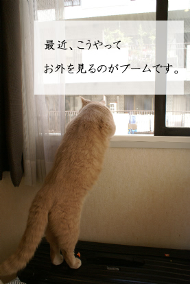 お外を見るのは面白い!