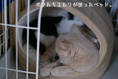 子猫のころ