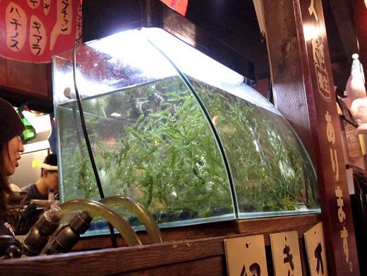 07kabuki_09_09_11.jpg