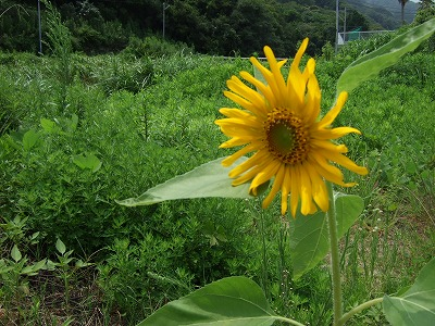 2007_0807izushimoda0001.jpg