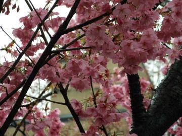 2009年3月25日横浜公園にて