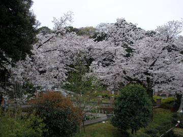 2009年4月5日 花見 元町~山手