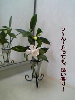 Ckuchinashinohana.jpg