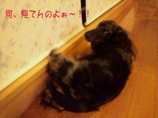 ashikake.jpg