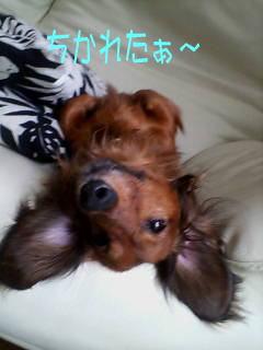 kyouken.jpg