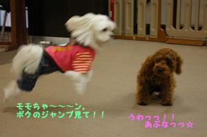 チャッピー&モモちゃん