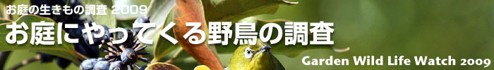 bird_title.jpg