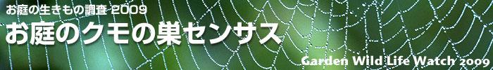 spider_title.jpg