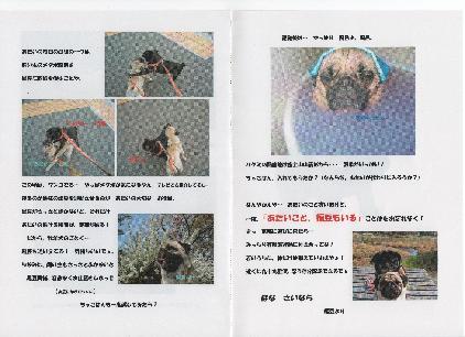 01福豆ちゃんからの手紙4